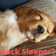Back sleeper neck pain